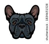 French Bulldog Face Isolated...