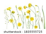 Watercolor Yellow Dandelions On ...