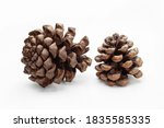 Two Cones Of Coniferous Trees...