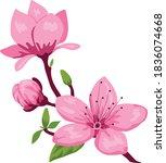 cherry blossom pink flower...   Shutterstock .eps vector #1836074668