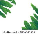 banana leaves are beautifully...   Shutterstock .eps vector #1836345535