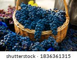 Grape Harvest In The Vineyard....