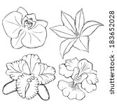 orchids. contours flowers. | Shutterstock . vector #183652028