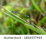 Macrophotography Of A Common...