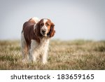 Stock photo happy dog 183659165