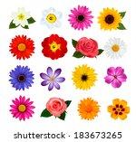 set of beautiful flowers.... | Shutterstock .eps vector #183673265