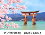Floating Torii gate (O-Torii) and branch of the blossoming sakura with white flowers, Itsukushima Shrine, sacred Miyajima island, Hiroshima, Japan. UNESCO world heritage site