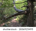 Hiking Trails  Forest Paths And ...