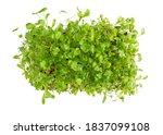 Microgreens  Micro Greens  ...