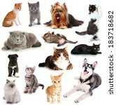 Stock photo collage of cats and dogs isolated on white 183718682