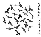 Set Of Seagulls Birds  Nautical ...