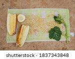 cucumber seeds. ripe yellow... | Shutterstock . vector #1837343848