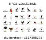 large bird collection vector ... | Shutterstock .eps vector #1837358278