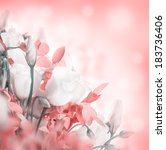 bouquet of white and pink roses.... | Shutterstock . vector #183736406