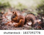 Squirrel Eats A Nut In The...