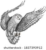 owl in flight northern black... | Shutterstock .eps vector #1837393912