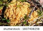Amazing Yellow Mushroom Like...