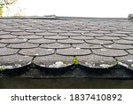 Moss And Moisture On Old Roof