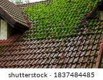 Shingle Roof With Green Moss On ...