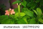 Beautiful Kanakambaram Flowers...