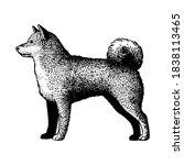 realistic shiba inu. dog breed  ...   Shutterstock .eps vector #1838113465