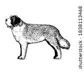 realistic st bernard dog. dog... | Shutterstock .eps vector #1838113468