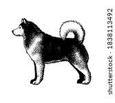 realistic alaskan malamute dog. ... | Shutterstock .eps vector #1838113492