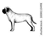 realistic mastiff dog. dog... | Shutterstock .eps vector #1838113498