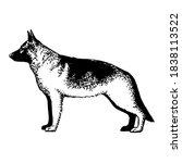realistic german shepherd . dog ... | Shutterstock .eps vector #1838113522