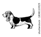 realistic basset hound. dog... | Shutterstock .eps vector #1838113525