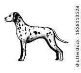 realistic dalmatian dog. dog... | Shutterstock .eps vector #1838113528