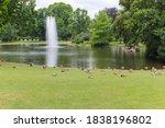 Many Ducks In The Park In...