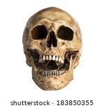 skull model in open the mouth... | Shutterstock . vector #183850355