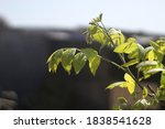 Small photo of these beautiful leaves are indispensable
