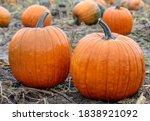 Beautiful Pumpkin Over Fall...