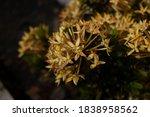 Close Up Of Yellow Flower Mini...