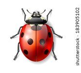 Ladybird Vector Illustration ...