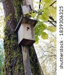 Birdhouse On An Old Tree In Th...
