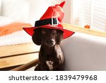Adorable German Shorthaired...