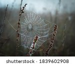 A Spider Web Covered With Dew...