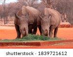 Wild African Animals. Portrait ...