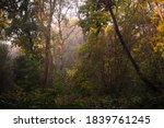 Wild Wood  Knaresborough  North ...