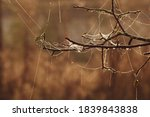 A Branch Of A Cherry Tree In A...
