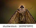 Macro Close Up Of A Moth In...