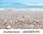 Seashells Many Sea Shells...