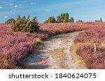 Hiking Trail Trough Flowering...