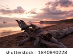 Picturesque driftwood on the...