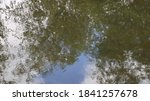 Reflection Of Trees In The...