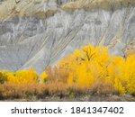 USA, Utah. Wayne County, The Blue Hills, Golden Fremont Cottonwood trees