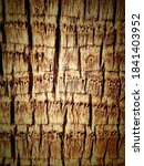 Textured Palm Trunk And...